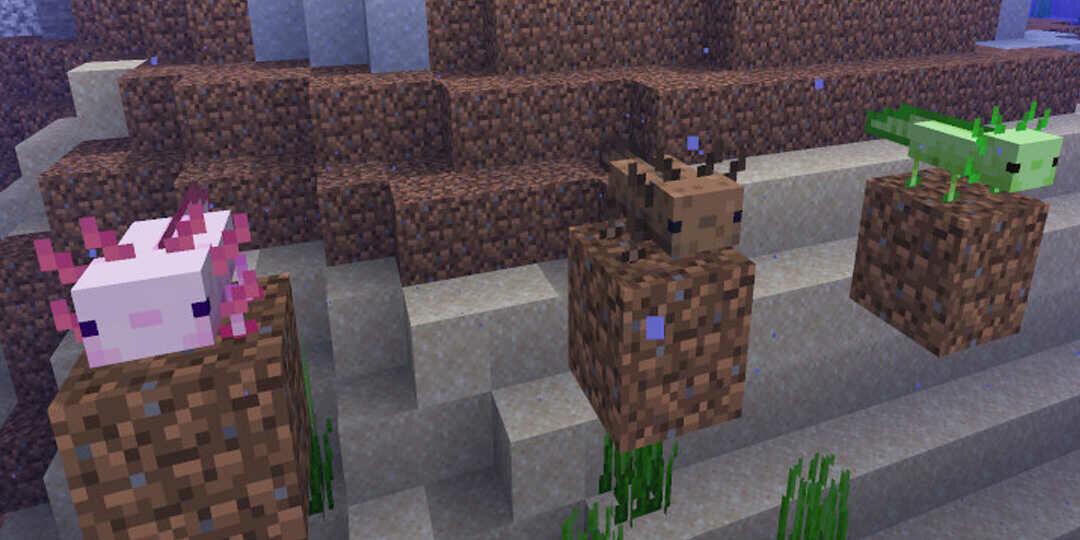 Minecraft új mob az axolotl